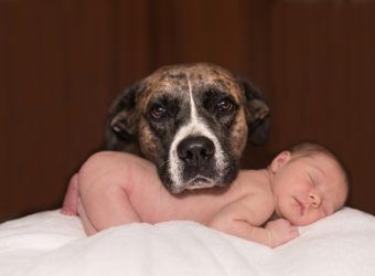 Zoznámenie psa s novorodencom